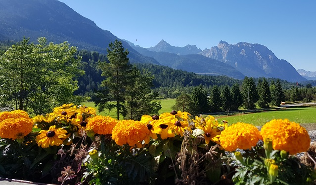 Summer flowers and mountain view of the Soiern and Wetterstein mountains